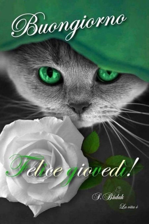 Buon Giovedì Gatti Immaginifacebookit