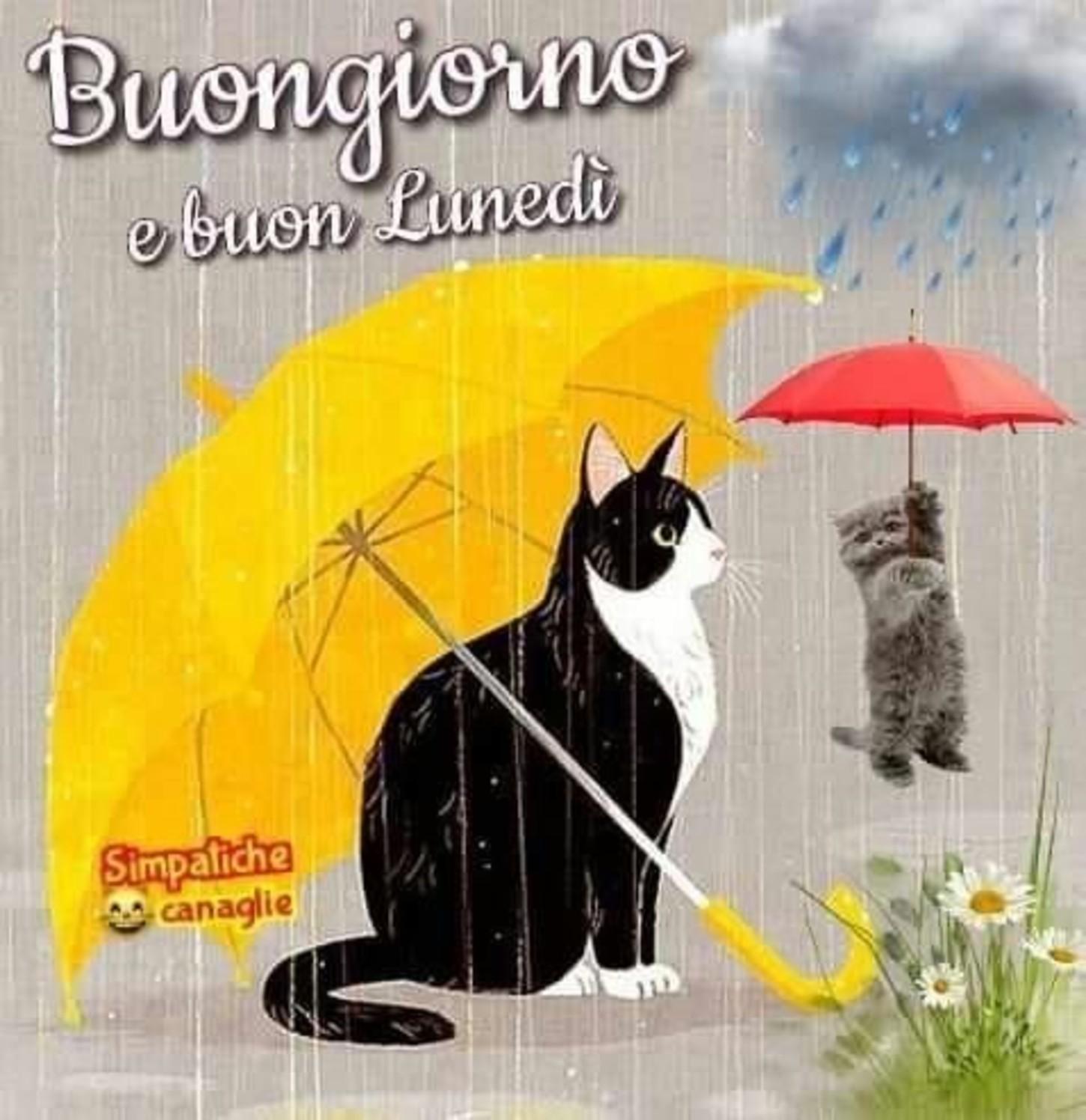 Buon Lunedì Con La Pioggia Piove Immaginifacebookit