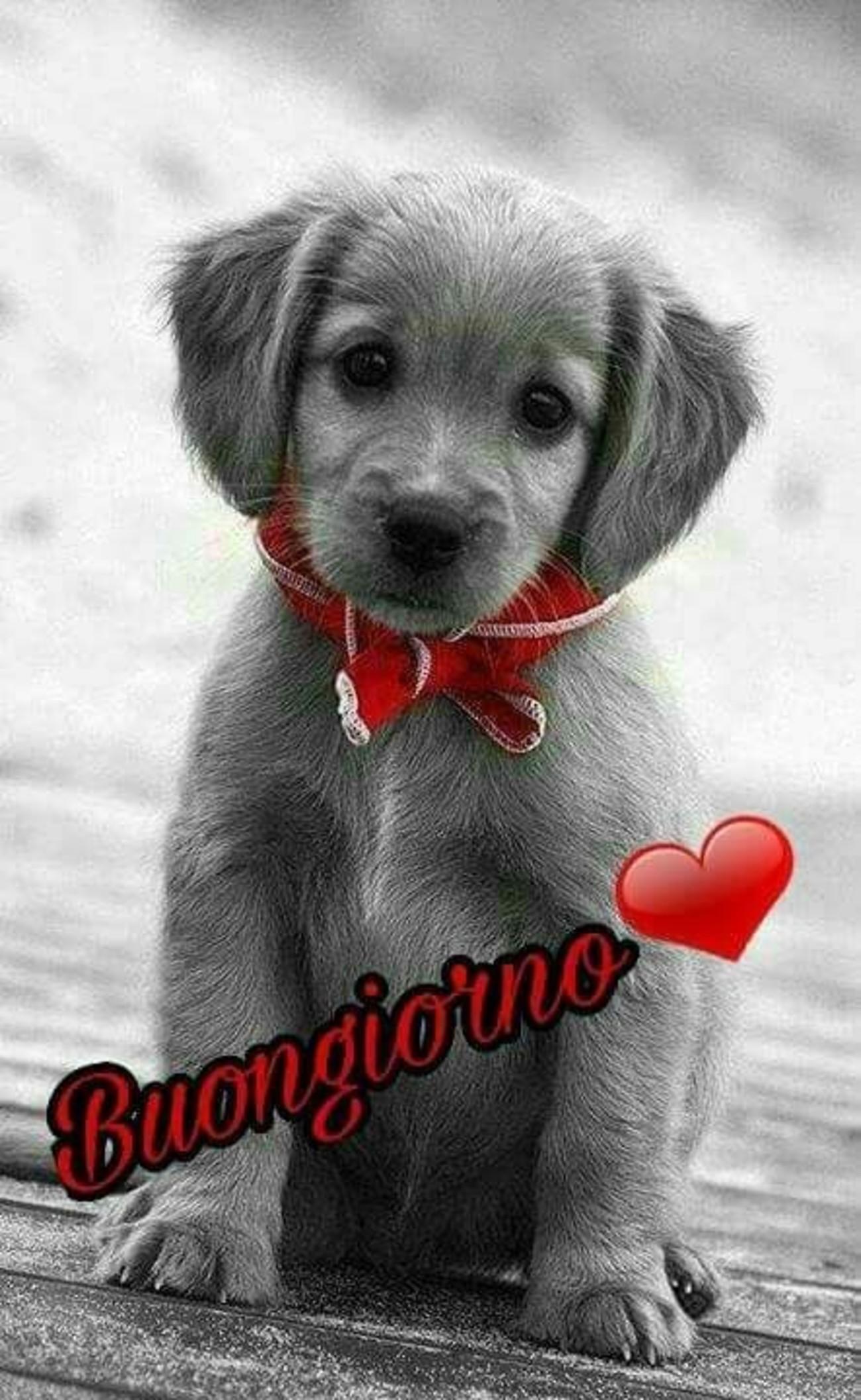 Buongiorno Amore Mio Foto 5 Immaginifacebookit