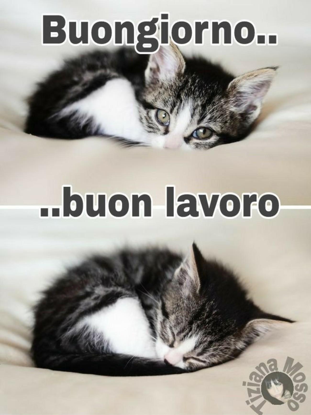 Buongiorno Coi Gattini 3 Immaginifacebook It