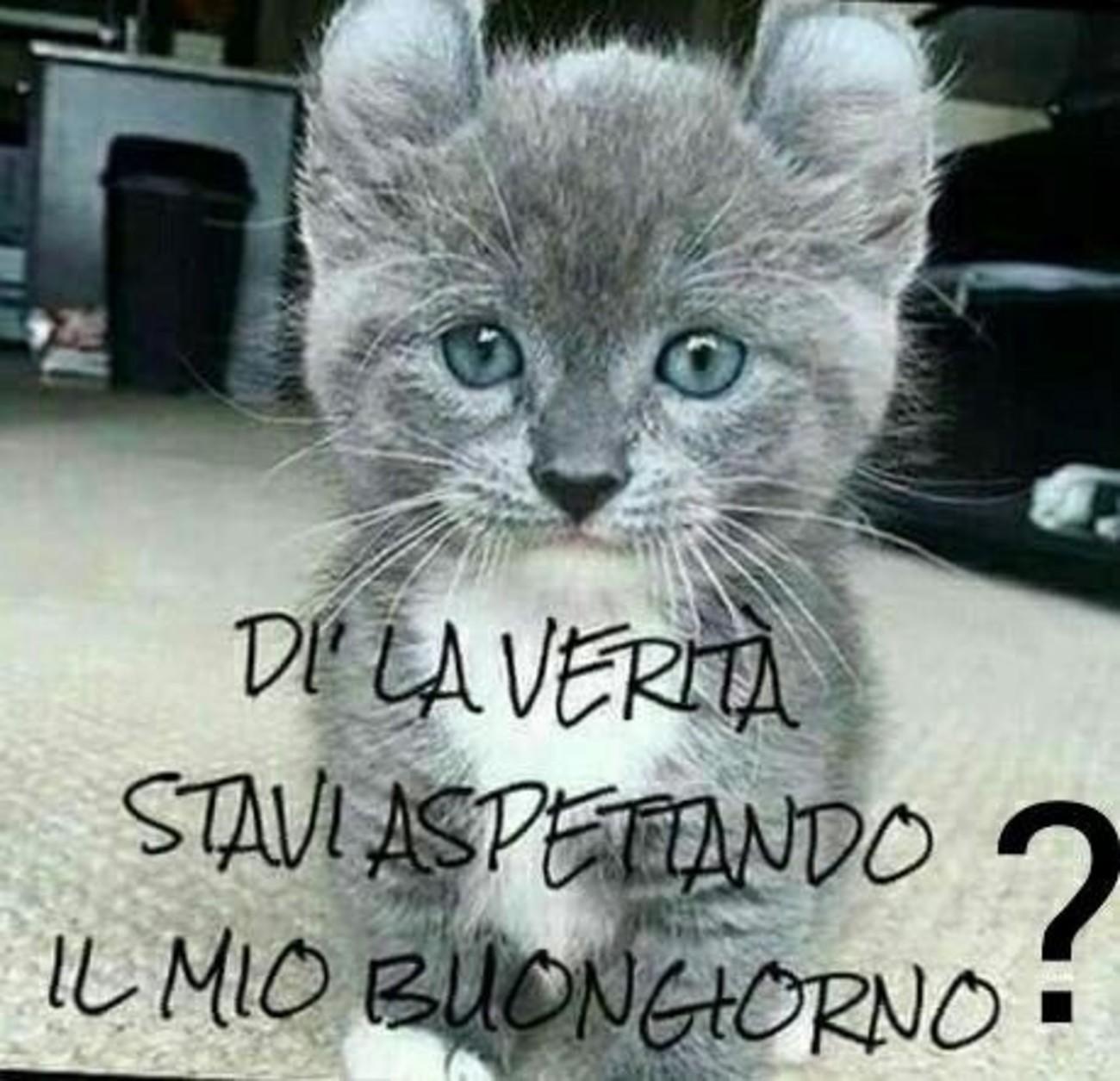 Buongiorno Coi Gattini 4 Immaginifacebook It