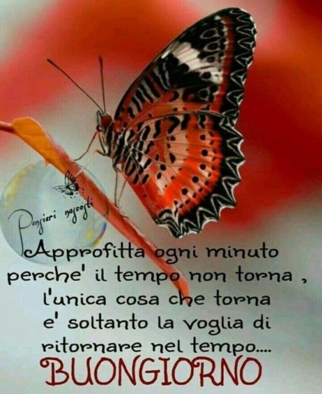 Buongiorno Farfalla Immaginifacebook It