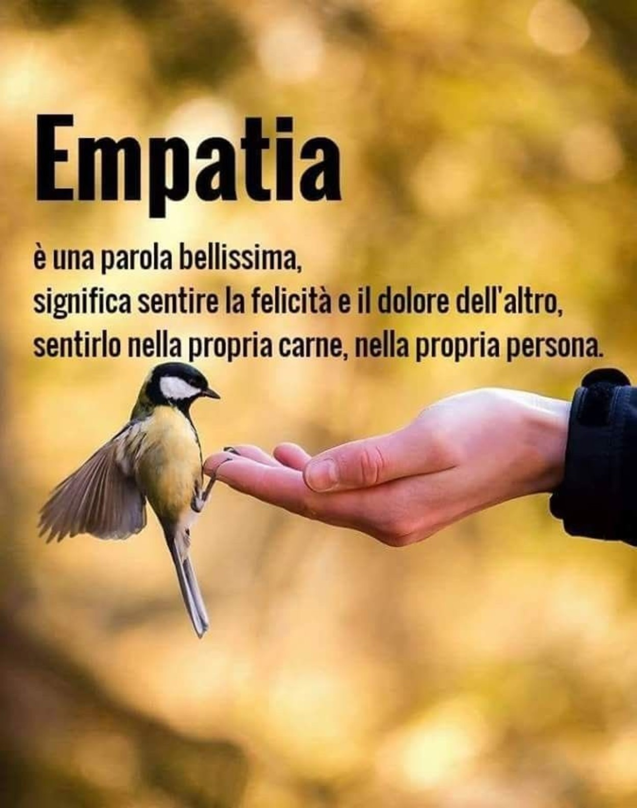 Citazioni Sull Empatia Immaginifacebook It
