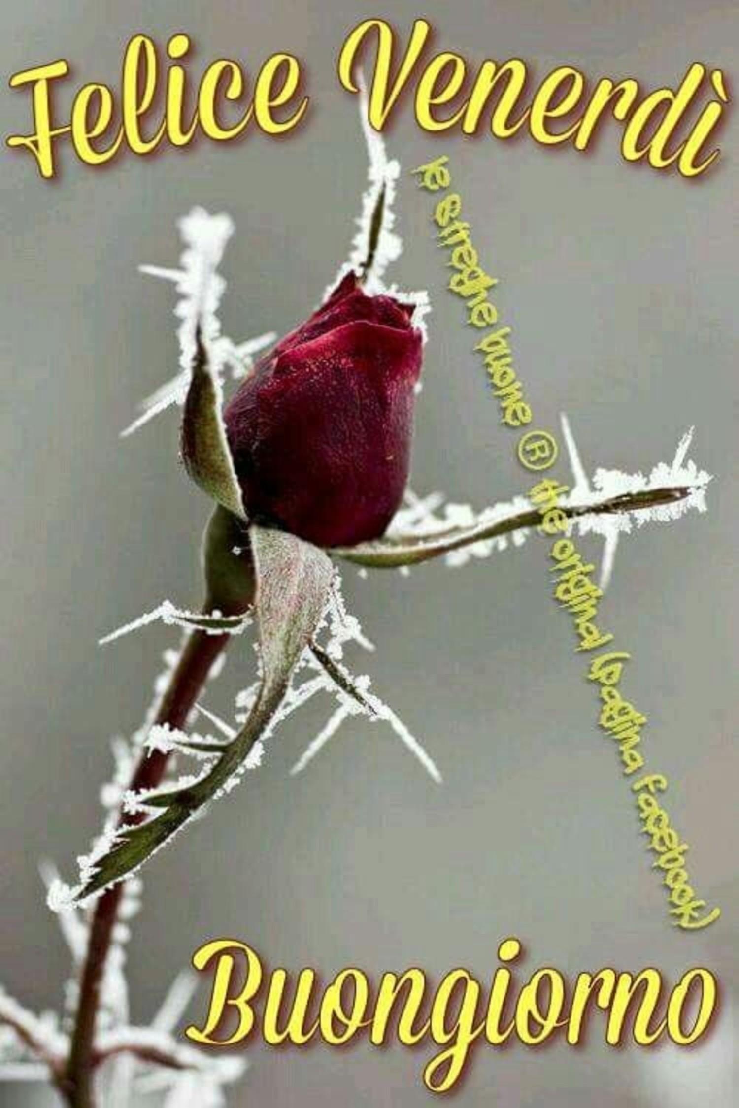 Felice Venerdì Buongiorno Inverno Immaginifacebook It
